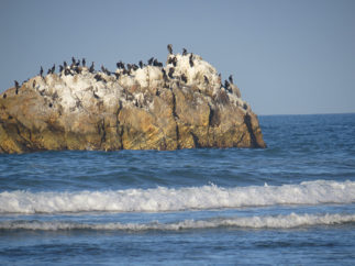 sea birds and guano covered rocks