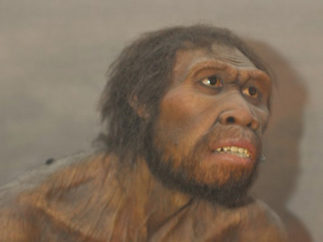 artist impression of Homo Ergaster