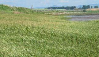 estuary fieldwork