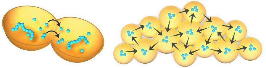 cartoon of protocells sharing contents