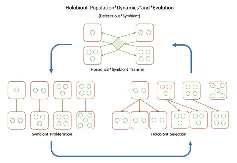 model of holobiont population dynamics and evolution