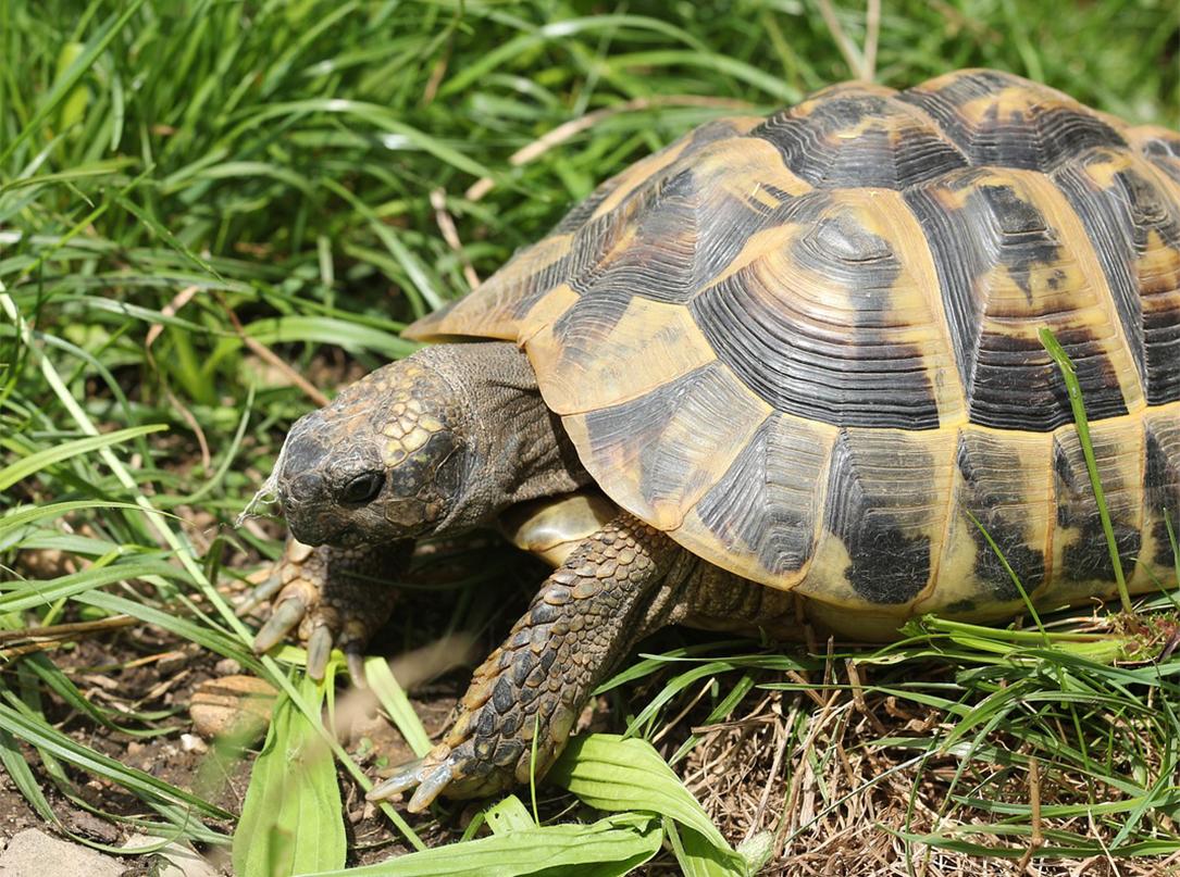 turtle walking on grass