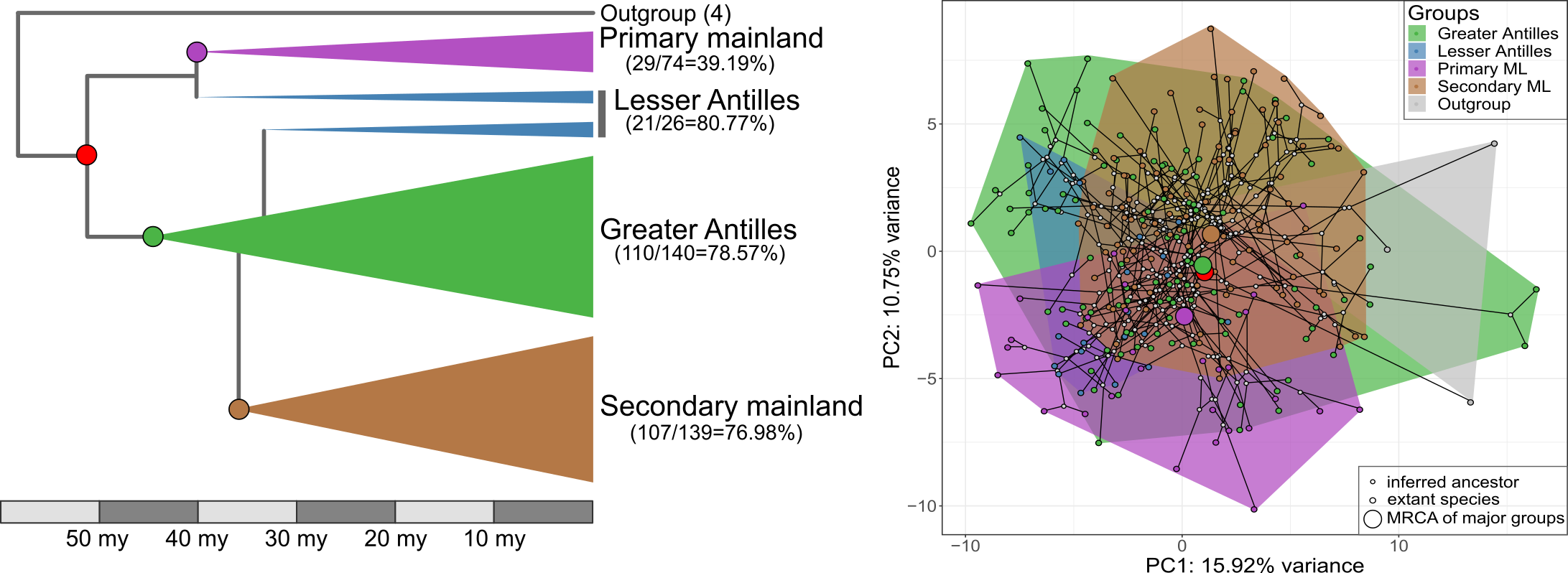 Anolis groups